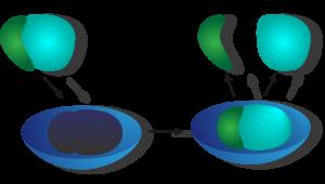 Schema der Funktion eines Enzyms